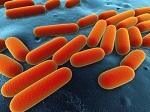 schimmel bacterie