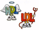 HDL + LDL